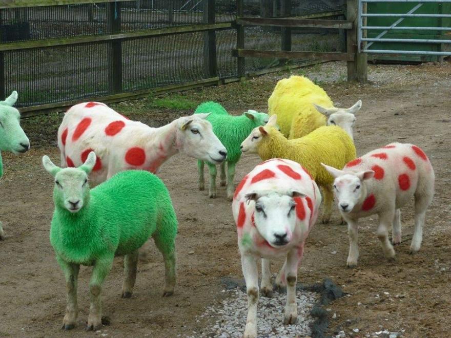pecore-tris